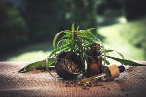 graines de cannabis france